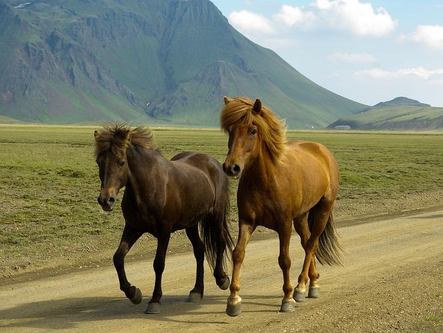 Partir en voyage en Islande : 2 attractions extraordinaires à découvrir